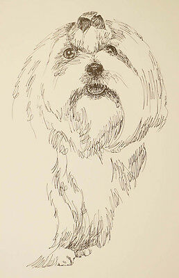 Maltese Dog Art Portrait Print #134 Kline adds dog name free. Drawn from words.