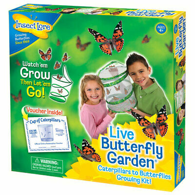 Live Butterfly Garden Kit - Children's Grow Your Own Butterfly Hatching Kit