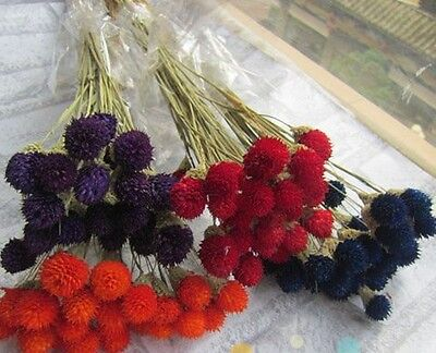 Strawberry Flowers*Dried Flowers*4 Colors*Total 100 heads Home Decoration