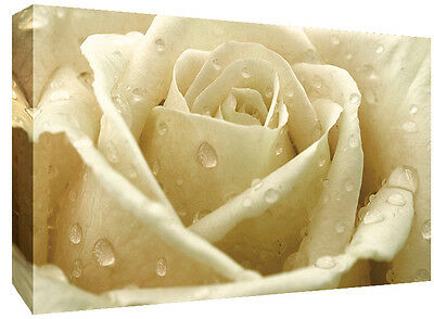 CREAM ROSE CANVAS ART FLOWER PRINT FLORAL WALL ART FLO11