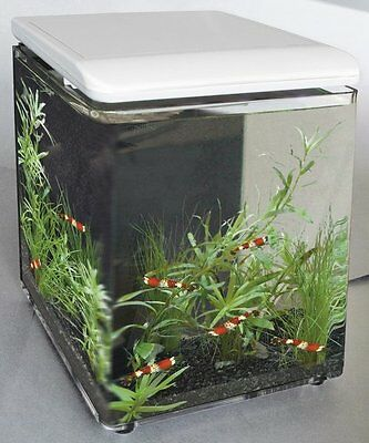 Superfish Home 8 Mini Aquarium with LED Lighting Nano Aquarium White