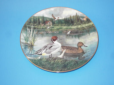(#56) Collectors plate pintail duck knowles
