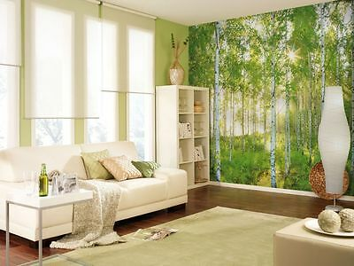 NON-WOVEN Photo Wallpaper Wall Mural SUNDAY BIRCH FOREST TREES 368x254cm  NG