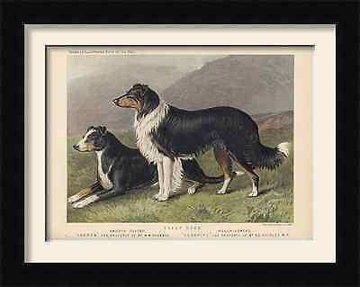 Vero Shaw Sheep Dog,  print Picture framed  ideal gift