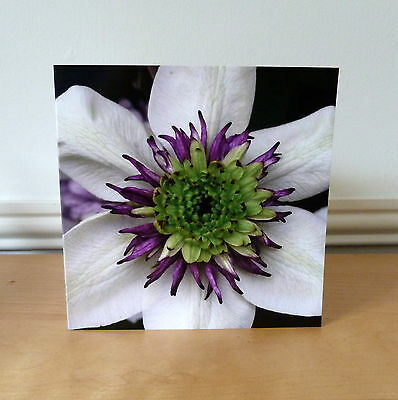 Blank Greetings Cards Flower Birthday Notelet All Occasions Notecard
