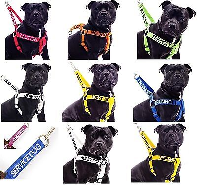 Colour Coded Large Safety Walking Non Pull Canine Pet Dog Harness Or Lead Sets