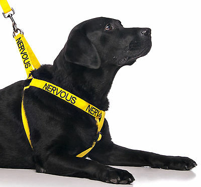 NERVOUS Yellow L XL Colour Coded Pet Dog Harness Or Sets By Friendly Dog Collars