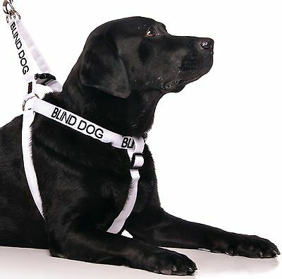 Canine Control BLIND DOG Pet Strap Dogs Harness Plus Luxury Handle Lead Sets