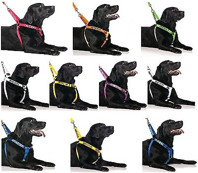 Strong as Leather Large Extra Large Dogs Harness And Optional Padded Handle Lead
