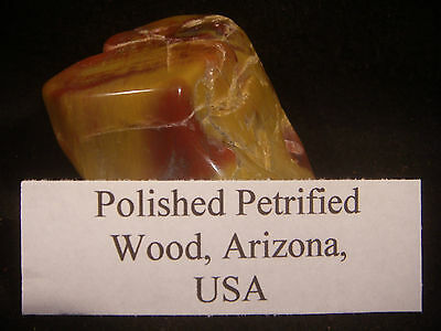 Beautiful Polished Petrified Wood From the United States