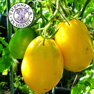 Rare Tomato Plum Lemon, Vegetable - 20 seeds - UK SELLER