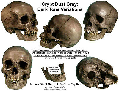 Authentic Human Skull-Life Size Replica Aged Relic -Crypt Dust Gray- Made in USA