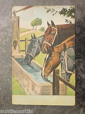 Vintage c. 1902 French Postcard: Group of Horses Drinking at a Trough