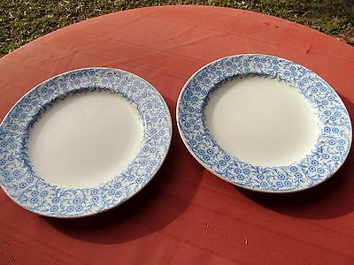 "2  Royal Worcester Vitreous Dinner Plates 9 5/8"" Blue Floral On White"