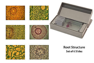 Microscopy Prepared Microcope Slides: Root Structure - Set of 6 ✔UK Seller