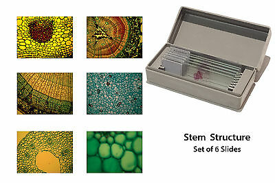 Microscopy Prepared Slides: Stem Structure - Set of 6