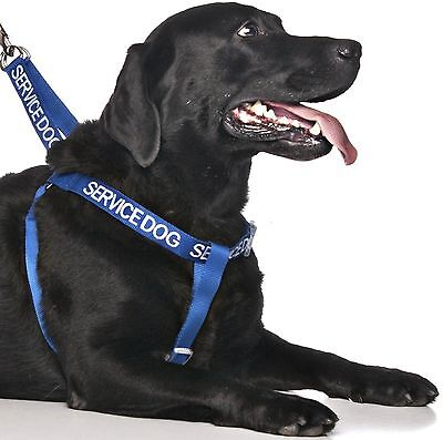 Non Pull Harness SERVICE DOG Blue Safety Heavy Duty Secure Harness Or Lead Set