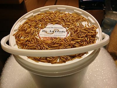 8.6 Litre tub of high quality mealworms