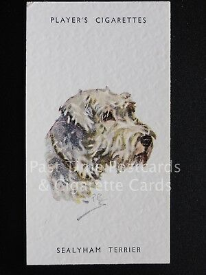 Single SEALYHAM TERRIER No.46 'DOGS HEADS By Biegel' EXC Player Unissued