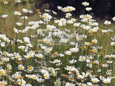 Photo of white wild flowers in a meadow 5x7