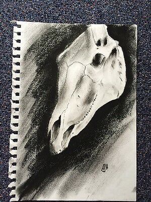 FREE POST Horse Skull drawing charcoal A4 by Adam Herbert art Gothic Creepy