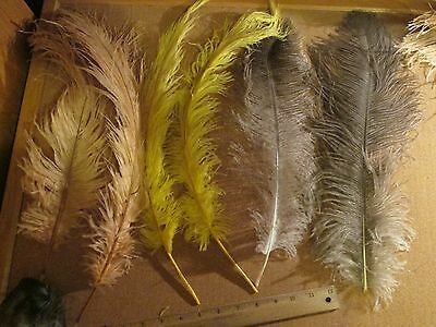 LoT 235 - Ostrich Spey Plumes Herl Feathers Fly Tying Store  - Decoration Craft