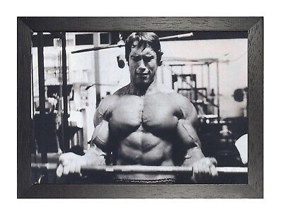 Arnold Schwarzenegger 8 Actor Model Producer Bodybuilder Governor Poster Print