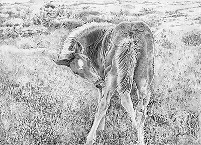 """Just Itch'n""  Limited Edition, Pencil, Graphite, Realism, Colt, 8"" x 11"""""