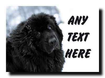 Newfoundland Dog Personalised Jumbo Magnet
