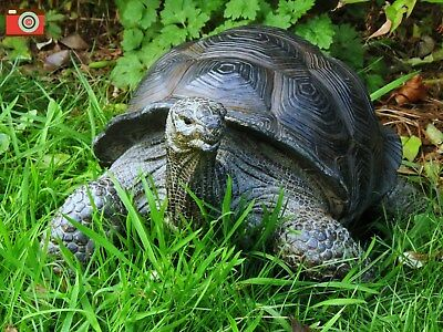 Giant Tortoise, Life Size Stunning Home & Garden Ornament. Ultra Realistic