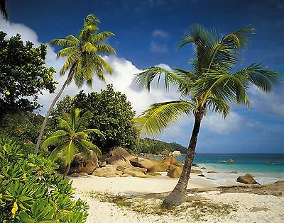 PRASLIN Photo Wallpaper Wall Mural SANDY BEACH OCEAN PALMS  368x254cm HUGE!