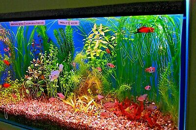 25 LIVE QUALITY Tropical  AQUARIUM Plant collection for FISH TANK 5 varieties