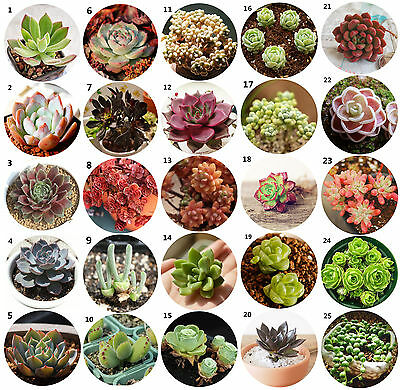Hot 60pcs Succulents Seeds Rare Mini Potted Flower Seeds Home Office Decorative