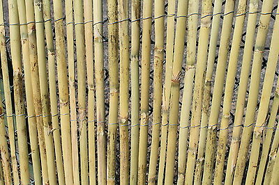 Bamboo Garden Screening Fencing Rolls 1.2M Tall and 3.8M Long