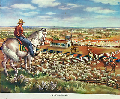 Rare Macmillan School Poster - Yarding Sheep in Australia - signed A Lambe