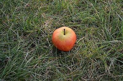 Large Apple Schraubnano Geocaching Hiding Container Microdose cache Nano