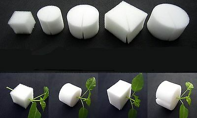 25PCS White Cloning Collar Foam Insert Pot Hydroponic Root Guard Mesh #M1137 QL