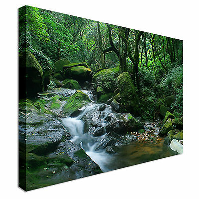 Green Jungle Floor Canvas wall Art prints high quality great value