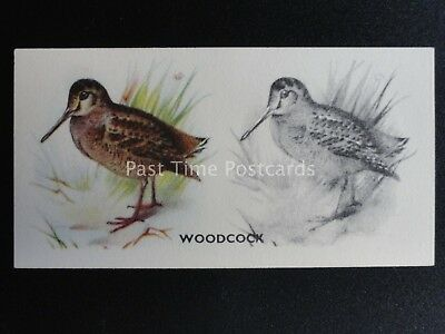 No.48 WOODCOCK - Bird Painting by Godfrey Phillips 1938