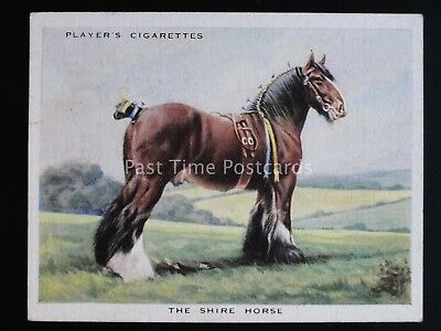 No.3 THE SHIRE HORSE - Types of Horses L25 by John Player & Sons 1939
