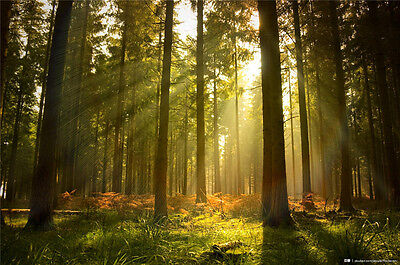 Forest Prepasted Mural Wallpaper Wallcovering Photo Wall Home Drcora BZ212