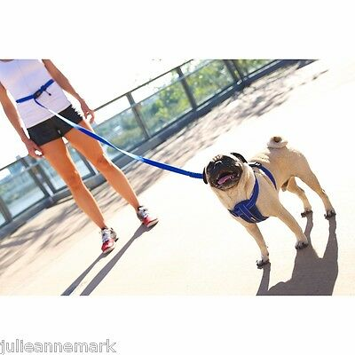 Road Runner Lead By Ezy_Dog For  Hands Free Walking With Zero Shock Technology