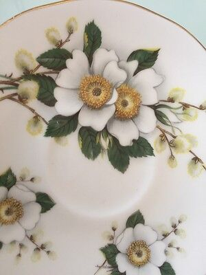 Duchess Bone China Saucer -  England White Flowers & Pussy Willows w/ Gold Trim