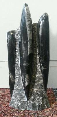 Small Orthoceras Fossil Tower Sculpture*Cut and Polished*Free Standing*815g