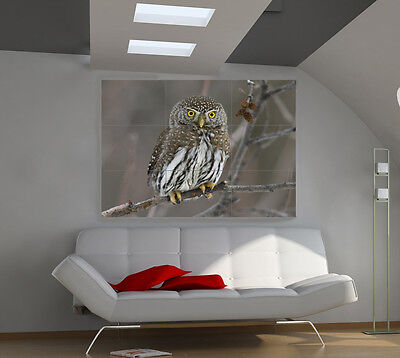 Owl large giant animals poster print photo mural wall art ia538
