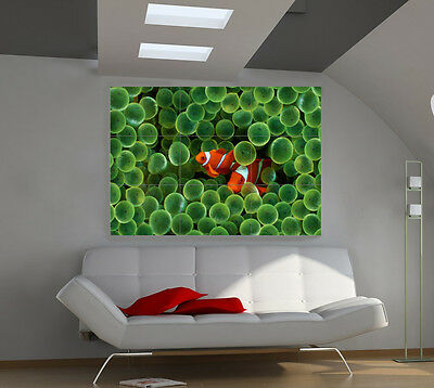 Clown Fish large giant animals poster print photo mural wall art ia517