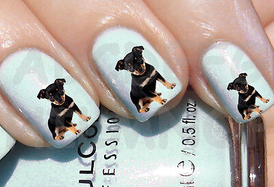 60 x Nail ART agua CACHORRO PINCHER transferencia uñas DOG STICKERS water DECALS