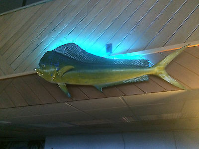 LIGHT YOUR FISH MOUNT color changing, fishing, tackle, lures, hunting outdoor