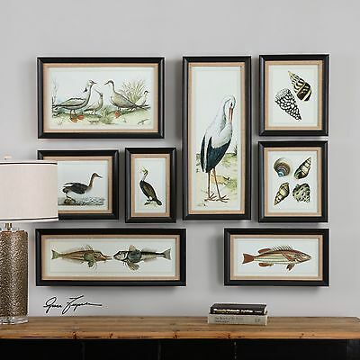 Eight Rich Color Prints Pictures Under Glass Dark Brown Frames Fish Shells Beach