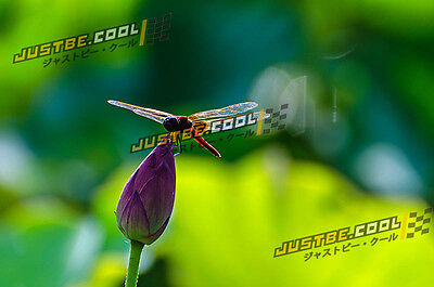 Digital Picture/Photo/Wallpaper/Desktop Background/ beauty of nature dragonfly